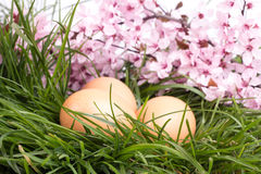 Huevos con la flor rosada Fotos de archivo libres de regalías