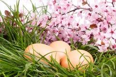 Huevos con la flor rosada Imágenes de archivo libres de regalías