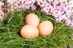 Huevos con la flor rosada Foto de archivo