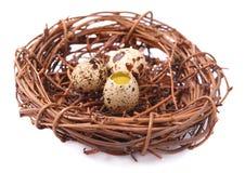 Huevos crudos del guail Fotografía de archivo libre de regalías