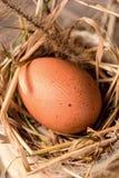 Huevos crudos en una jerarquía del heno Imagen de archivo