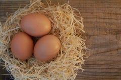 Huevos de Brovn Fotografía de archivo