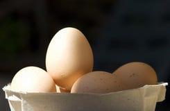 Huevos de Brown Fotos de archivo
