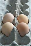 Huevos de Brown en cartón Imagenes de archivo