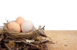 Huevos de Brown en una jerarquía con un fondo blanco Foto de archivo