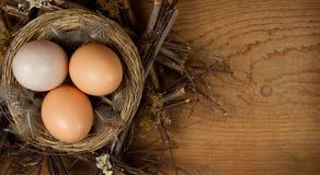 Huevos de Brown en una jerarquía con un fondo de madera Imagen de archivo
