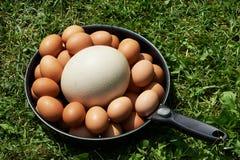 Huevos de Chiken y huevo de la avestruz en la cacerola Fotografía de archivo