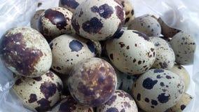 Huevos de codornices stock de ilustración