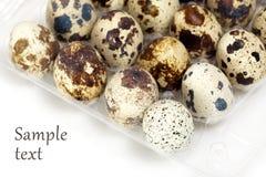 Huevos de codornices Fotos de archivo libres de regalías