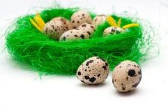 Huevos de codornices Fotografía de archivo