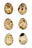 Huevos de codornices Fotografía de archivo libre de regalías