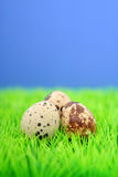 Huevos de codornices Imagenes de archivo