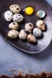Huevos de codornices Foto de archivo libre de regalías