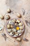 Huevos de codornices adornados con la pluma Alimento biológico Estilo rústico Visión superior Imagen de archivo