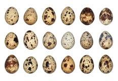 Huevos de codornices aislados Foto de archivo libre de regalías