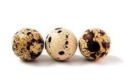 Huevos de codornices blancos Imagen de archivo