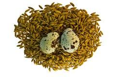 Huevos de codornices con arroz Fotos de archivo