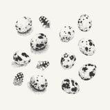 Huevos de codornices con y sin sombras Fotografía de archivo libre de regalías