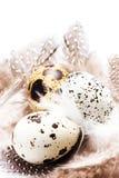 Huevos de codornices crudos con las plumas aisladas en el cierre blanco del fondo Fotos de archivo