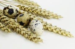 Huevos de codornices de Pascua con trigo en un fondo blanco Fotografía de archivo