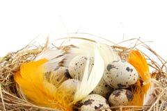 Huevos de codornices de Pascua en la jerarquía con las plumas aisladas Fotos de archivo