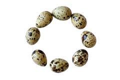 Huevos de codornices en el círculo Foto de archivo
