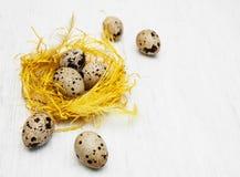 Huevos de codornices en jerarquía Fotografía de archivo