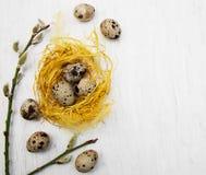 Huevos de codornices en jerarquía Fotografía de archivo libre de regalías