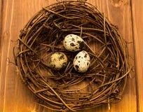 Huevos de codornices en jerarquía imágenes de archivo libres de regalías