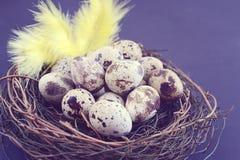 Huevos de codornices en jerarquía en fondo negro Imagen de archivo libre de regalías