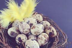 Huevos de codornices en jerarquía en fondo negro Imagenes de archivo