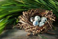 Huevos de codornices en la jerarquía fotos de archivo libres de regalías