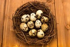Huevos de codornices en la jerarquía imagen de archivo libre de regalías