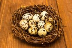 Huevos de codornices en la jerarquía imágenes de archivo libres de regalías