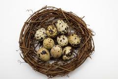 Huevos de codornices en la jerarquía foto de archivo libre de regalías