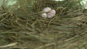 Huevos de codornices en la jerarquía en la placa giratoria
