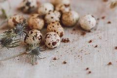 Huevos de codornices en la tela imagenes de archivo