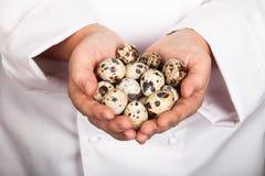 Huevos de codornices en las manos del cocinero Foto de archivo libre de regalías