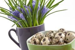 Huevos de codornices en taza verde con las azafranes en blanco Fotografía de archivo libre de regalías