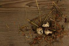 Huevos de codornices en un de madera Fotos de archivo libres de regalías