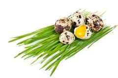 Huevos de codornices en una hierba verde Foto de archivo libre de regalías