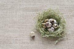 Huevos de codornices en una jerarquía del heno en el fondo del lino imagen de archivo