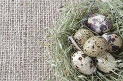 Huevos de codornices en una jerarquía del heno en el fondo del lino, copia-spac fotos de archivo