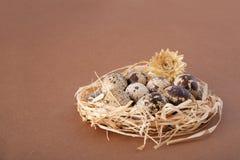 Huevos de codornices en una jerarquía en marrón fotografía de archivo