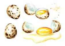 Huevos de codornices fijados Ejemplo dibujado mano de la acuarela aislado en el fondo blanco Fotos de archivo libres de regalías