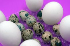 Huevos de codornices hervidos en el fondo blanco fotos de archivo