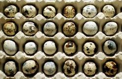 Huevos de codornices manchados Imagen de archivo libre de regalías