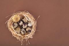 Huevos de codornices manchados en una jerarquía fotografía de archivo