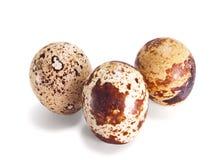 Huevos de codornices multicolores. Imagen de archivo libre de regalías