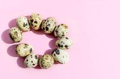 Huevos de codornices naturales en forma oval en fondo rosado Flatlay, visión superior, espacio mínimo de la copia fotografía de archivo libre de regalías